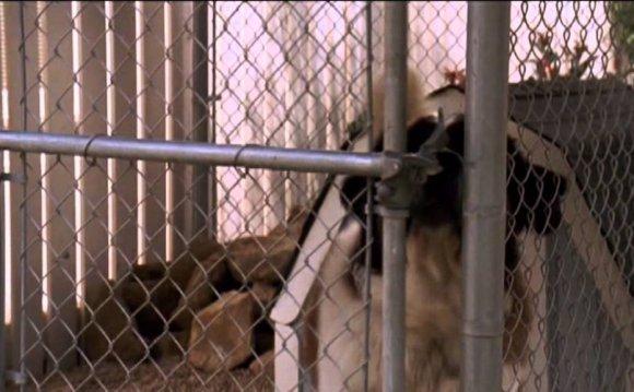 Бетховен Triplex Собака