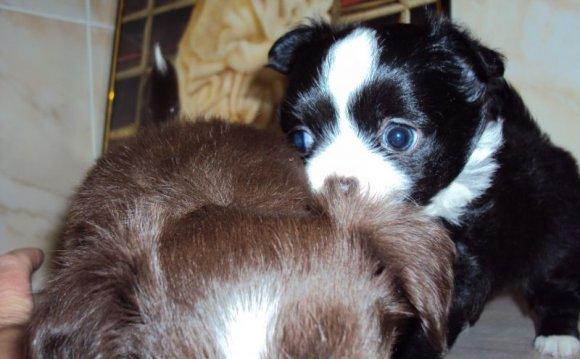 и щенки - Самая маленькая