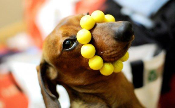 желтая собака фото 8