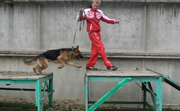 Как я покупал щенка немецкой