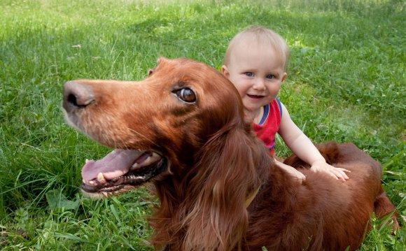 какие собаки любят детей.jpg6