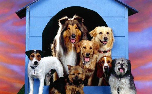 «Самые мощные собаки в