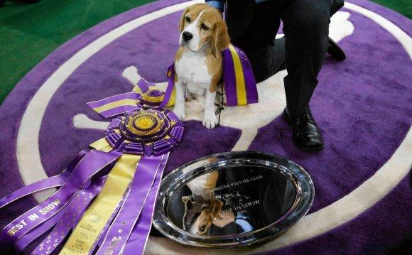 Лучшая породистая собака мира