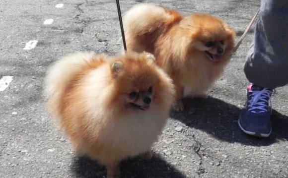 Наши маленькие собаки