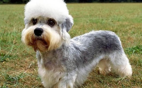 Aid1 Необычные породы собак