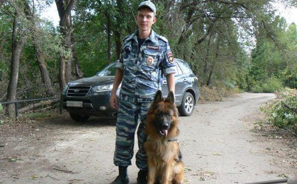Фото служебных собак скачать