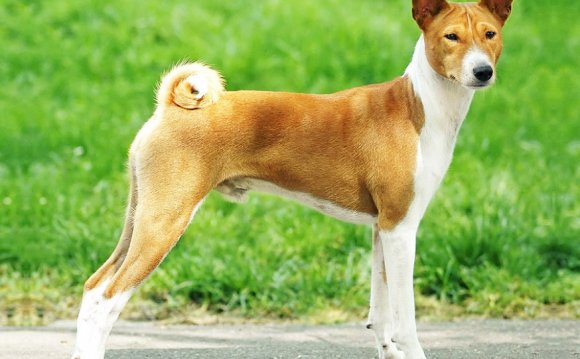 Породы собак на букву Б