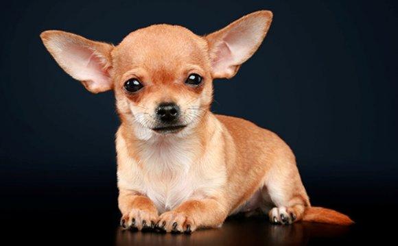 Породы с короткими ушами↑К