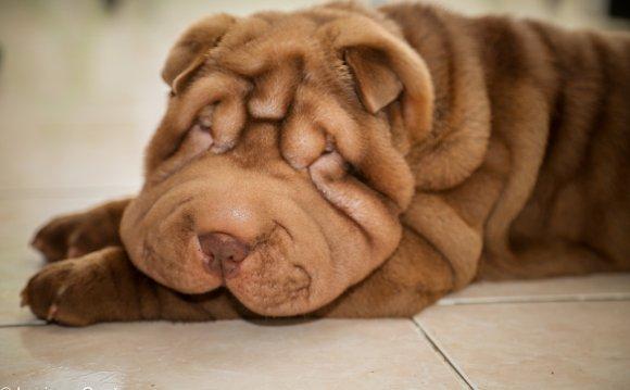 Особенности категории собак