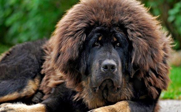 Самая сильная собака10