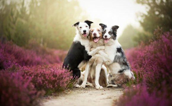 Таких шикарных портретов собак