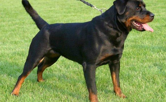 Топ 10 самых опасных собак: