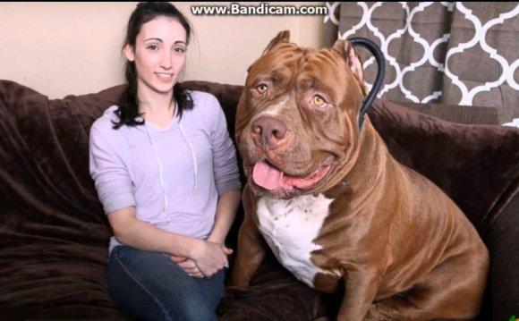 ТОП САМИХ болыших собак в мире