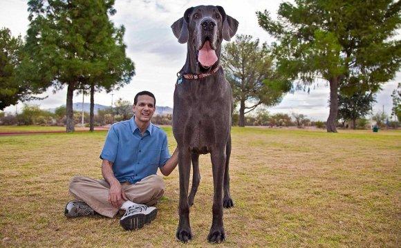 самый большой пёс в мире