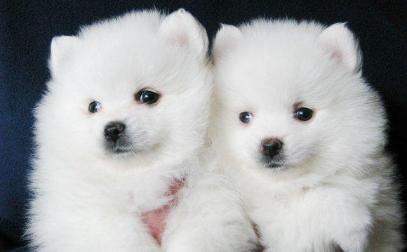 Самые маленькие породы собак в мире с фотографиями