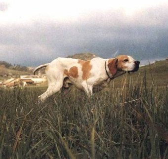 Картинки по запросу чутья у собак